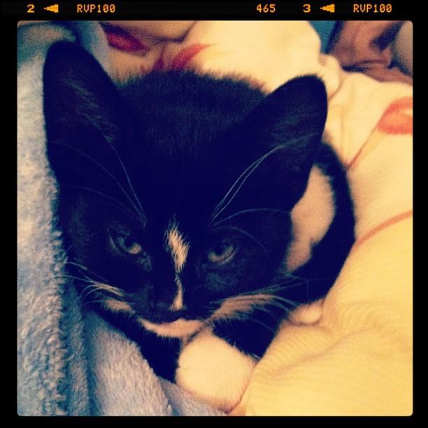 Sprocket, the Kitten