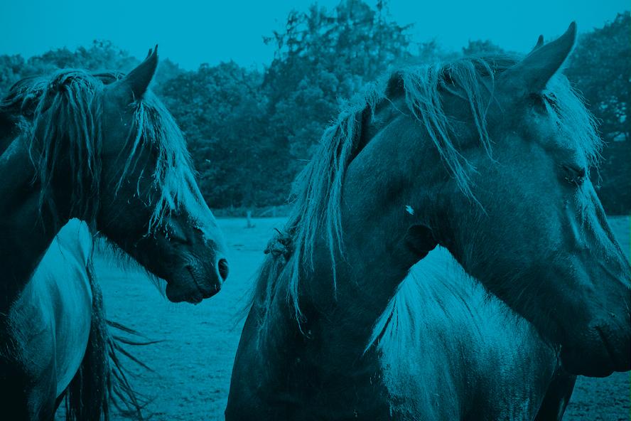 Wild Horses - Blue (Photo: Lex Augusteijn)