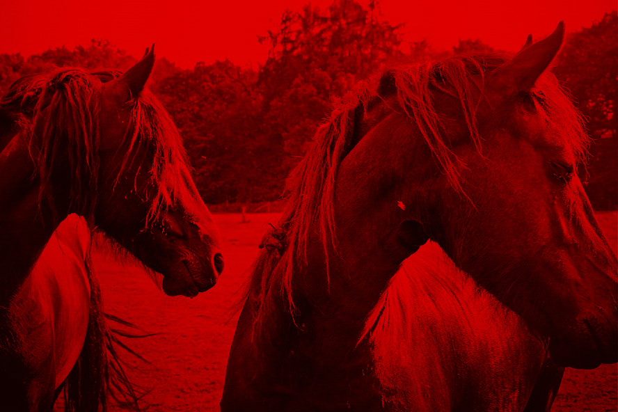 Wild Horses - Red (Photo: Lex Augusteijn)