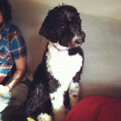 Moxy, the studio dog